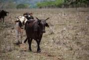 EL SEIBO – La lluvia que no moja la tierra