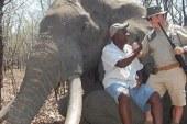 La caza de uno de los elefantes más grandes de Zimbabue indigna al mundo