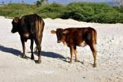 Ganadería realiza operativos en El Seibo para paliar sequía que afecta los ganaderos